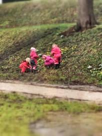 Fire piger plukker Erantis i Slotsparken